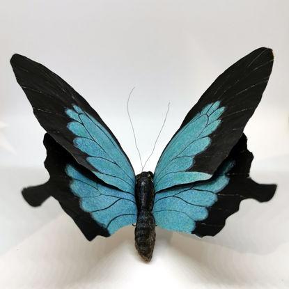 Immagine di Mariposa