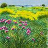 Immagine di Campo in fiore