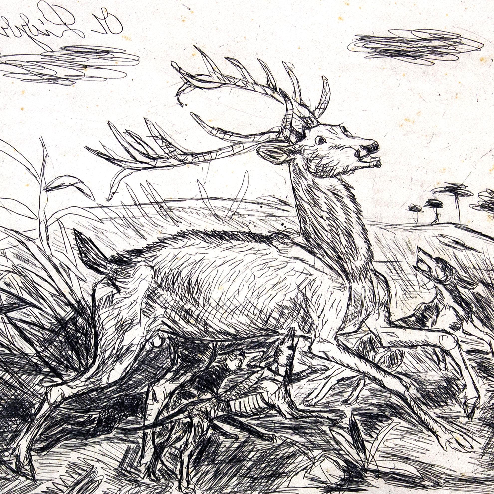 Immagine di Cervo assalito dai cani