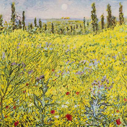 Immagine di Ginestre in Toscana