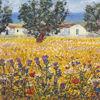 Immagine di Campo di grano