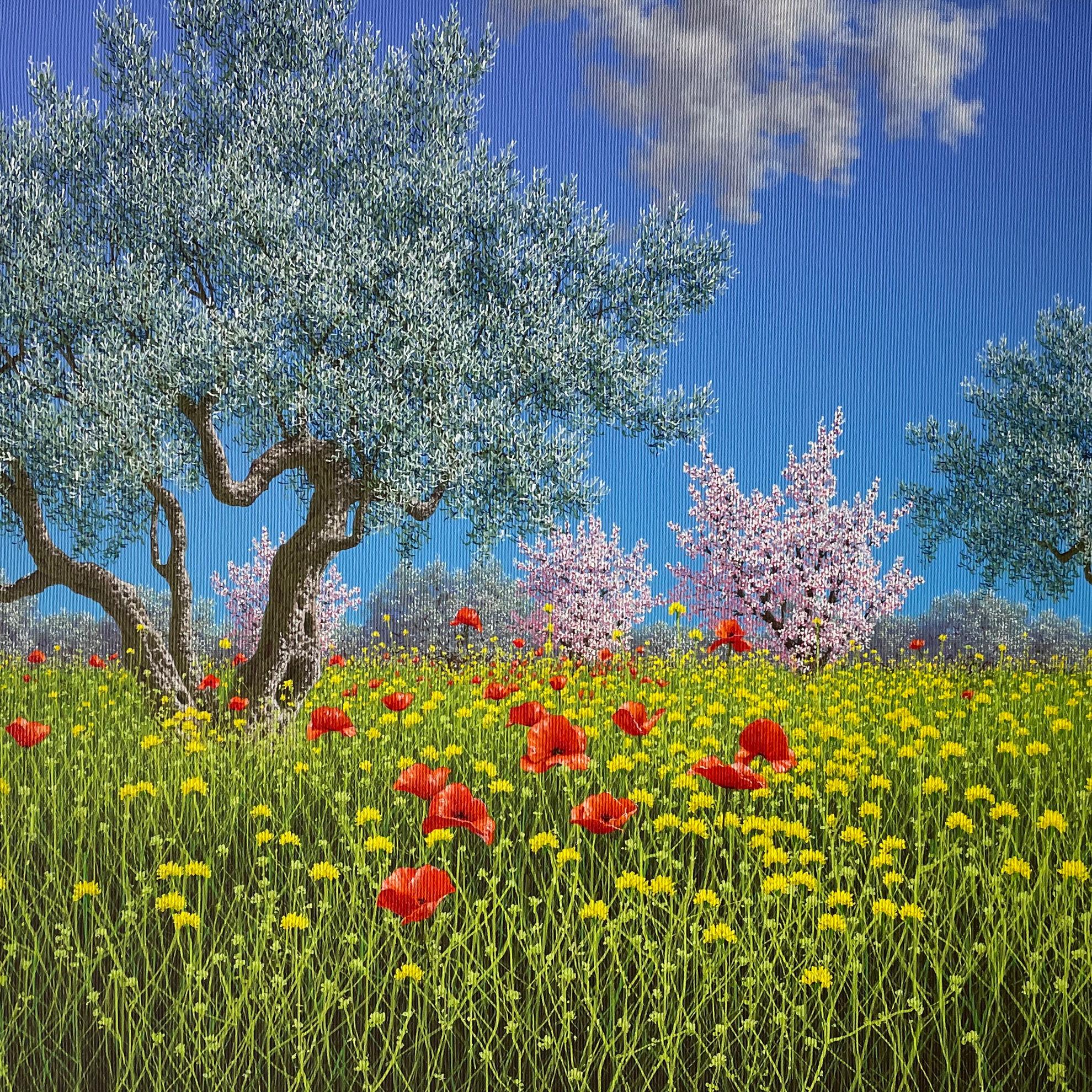 Immagine di Vecchi ulivi a Marianopoli