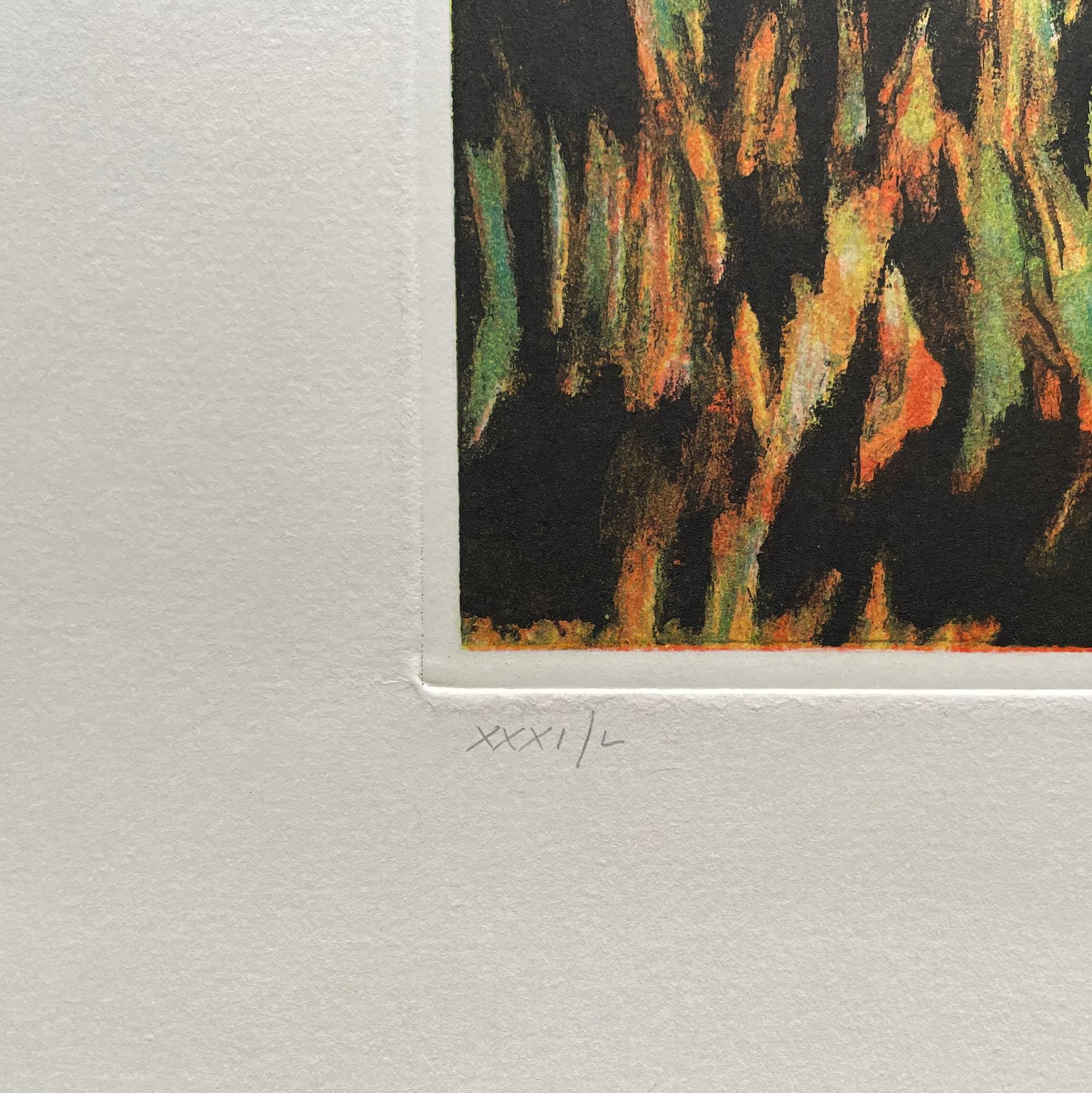 Immagine di Raccolta di arance